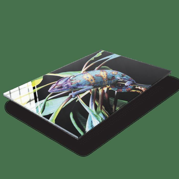 stampa fotografica su plexiglass
