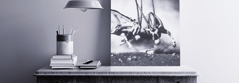 stampare foto su forex per arredamento